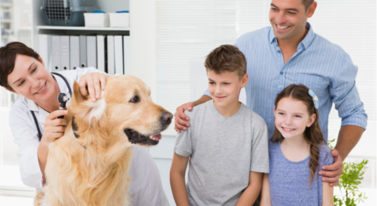 sueldo de un auxiliar de veterinaria