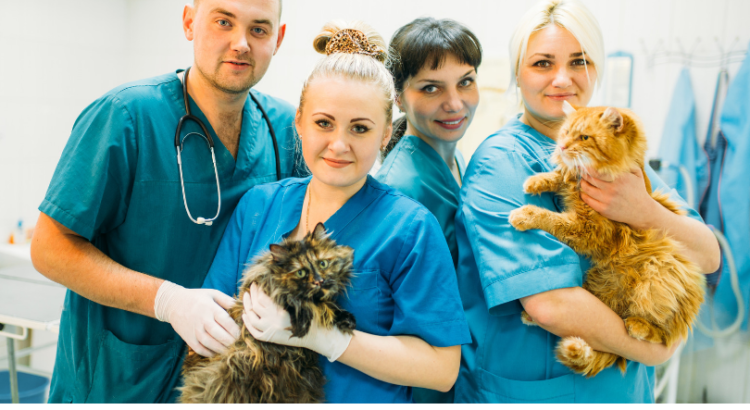 estudiar auxiliar de veterinaria